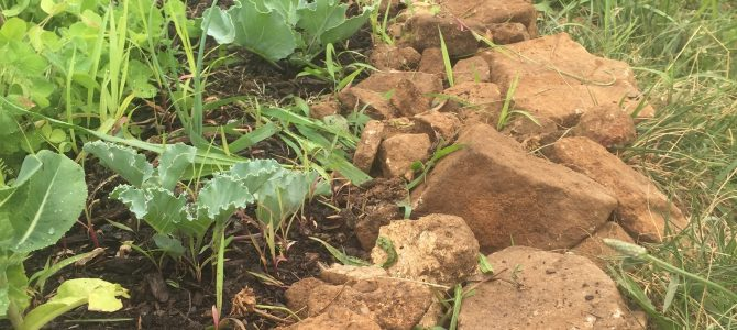 Rocky Soil: Asset or Liability?