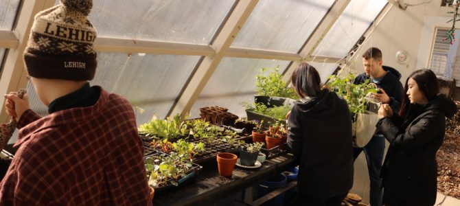 Winter Evolution of the Greenhouse